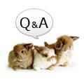 うさぎの飼育相談Q&A